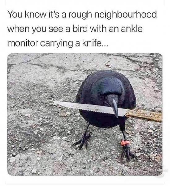 toughbird.jpg